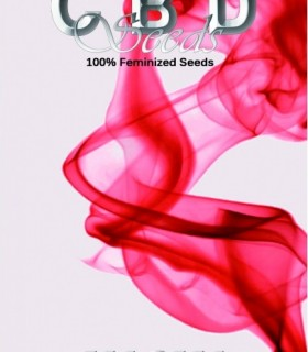 Magma by CBD Seeds