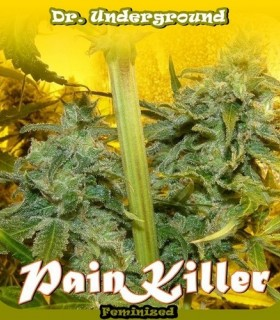 Pain Killer by Dr. Underground Seeds