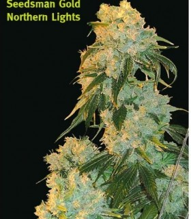 Northern Light by Seedsman