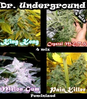 Killer Mix by Dr. Underground Seeds