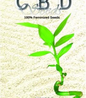 Zen by CBD Seeds