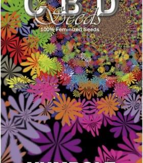 Yumbolt by CBD Seeds