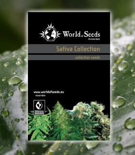 Sativa Collection by World of Seeds