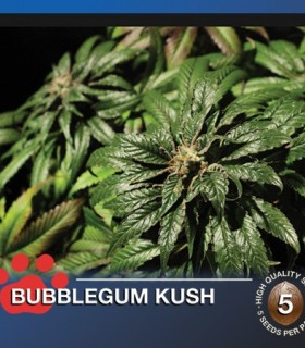 Bubblegum Kush by The Bulldog Seeds