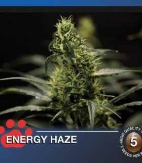 Energy Haze by The Bulldog Seeds