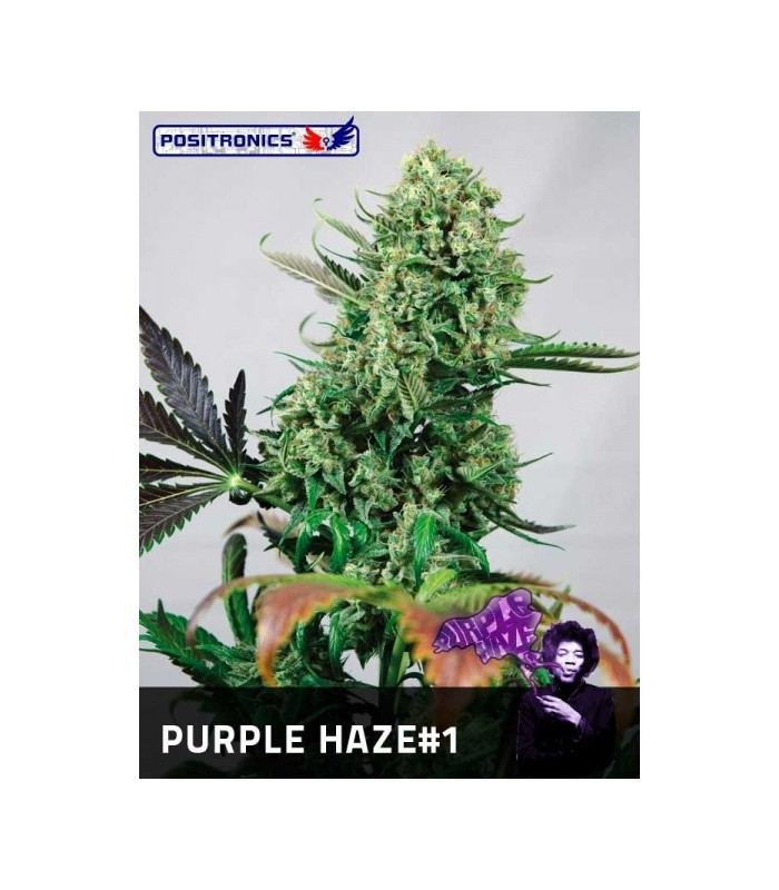 Purple Haze 1