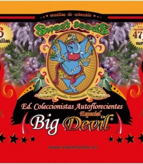 Ed. Coleccionista Autoflorecientes Especial Big Devil by Sweet Seeds