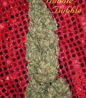 Hubble Bubble by Mandala Seeds