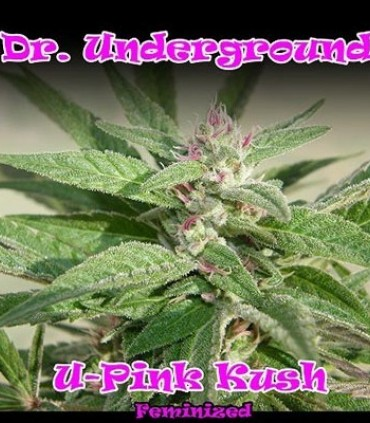 U - Pink Kush