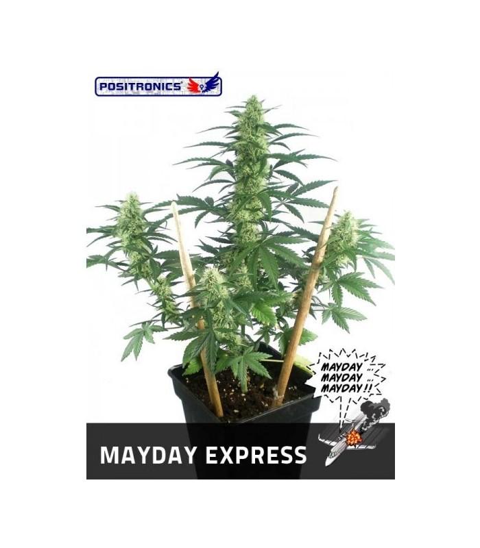Mayday Auto