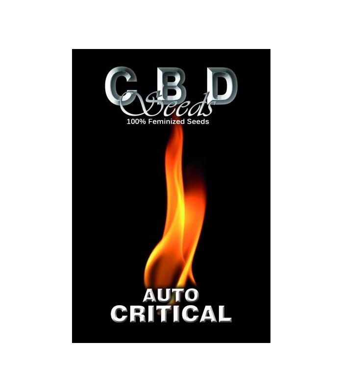 Auto Critical