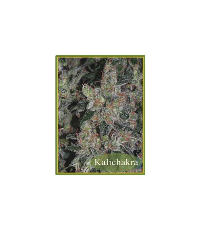 Kalichakra