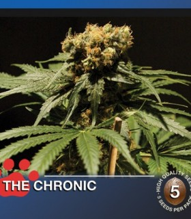 The Chronic by The Bulldog Seeds
