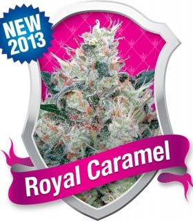 Royal Caramel by Royal Queen Seeds