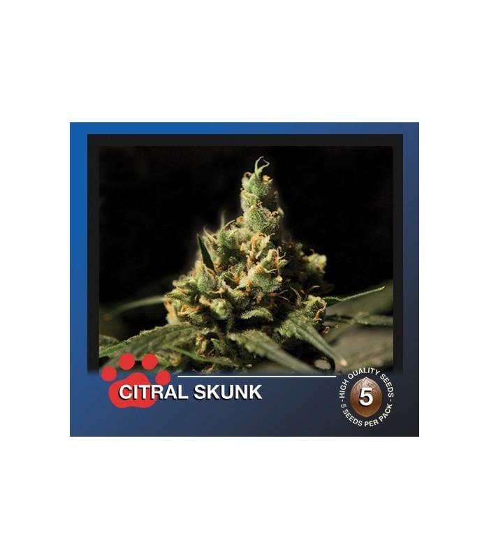 Citral Skunk