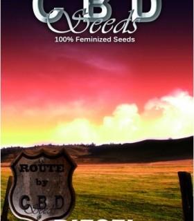 Diesel by CBD Seeds