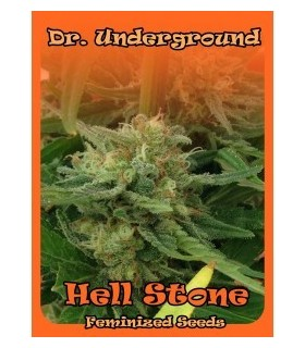 Hell Stone by Dr. Underground Seeds