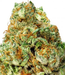 Turbo Bud by Heavyweight Seeds
