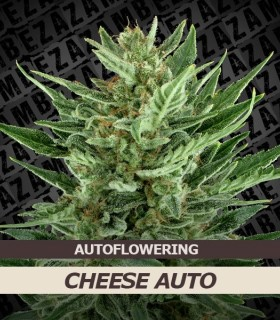 Cheese Automatic