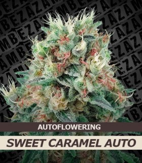 Sweet Caramel Automatic