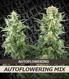 Autoflowering mix (10 seeds)