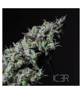 Icer by R-Kiem