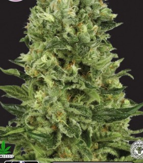 White Thunder by Kera Seeds