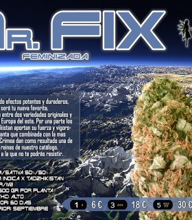Mr. Fix by VIP Seeds