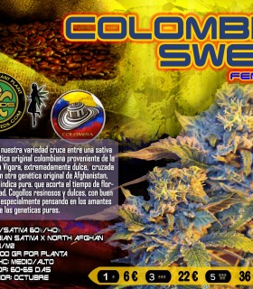 Colombian Sweet by VIP Seeds