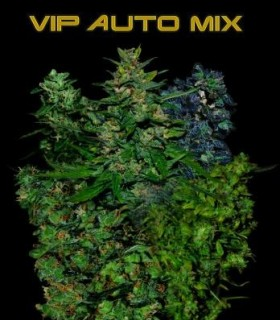 VIP Auto Mix by VIP Seeds