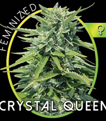 how to grow seed crystals