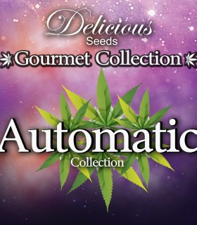 Automatic Gourmet Collection 1 by Delicious Seeds