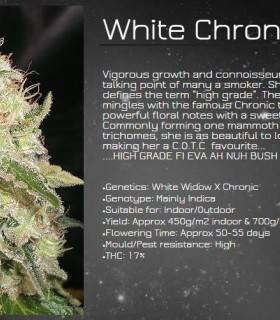 White Chronic by Cream Of The Crop