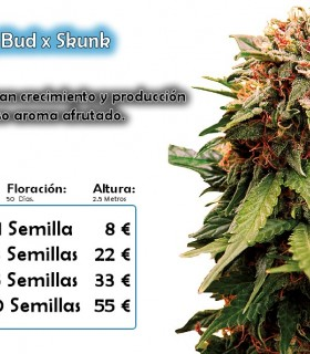 Total Critical by Bull Seeds