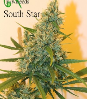 South Star by Kiwi Seeds