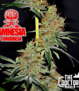 Amnesia Cordobesa by The Doctor Seeds