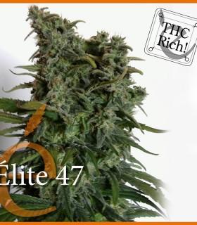 Elite 47