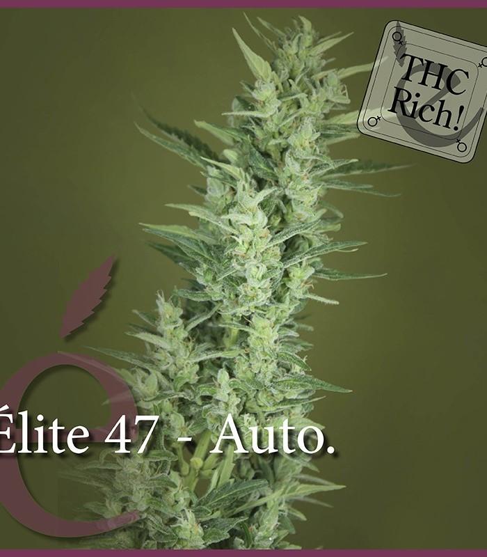 Elite 47 Auto
