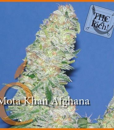 Mota Khan Afghana