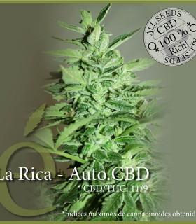 La Rica - Auto CBD