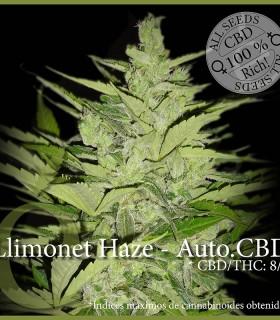 Llimonet Haze - Auto CBD