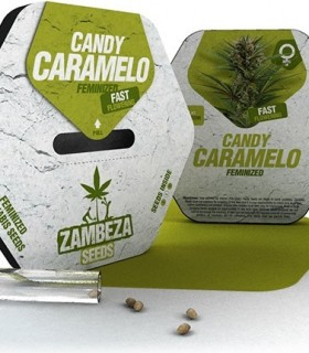 Candy Caramelo