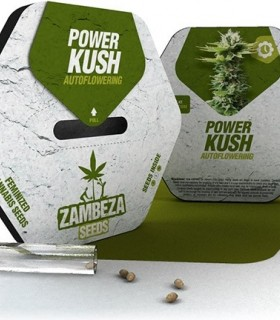 Power Kush Automatic