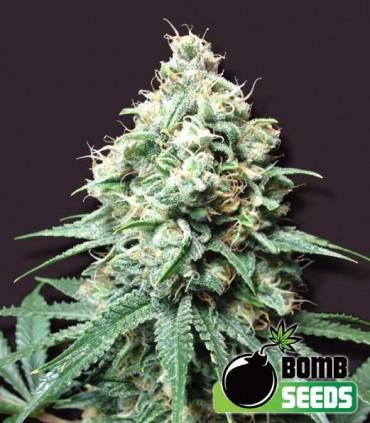 Kush Bomb