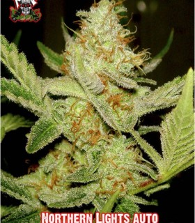 Northern Light Auto by Xtreme Seeds