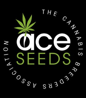 Green Haze x Malawi by Ace Seeds