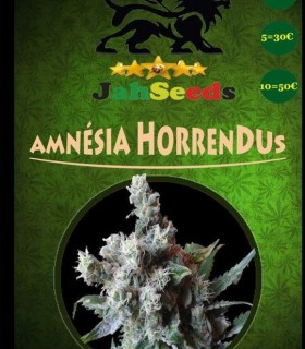 Amnesia Horrendus