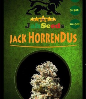 Jack Horrendus