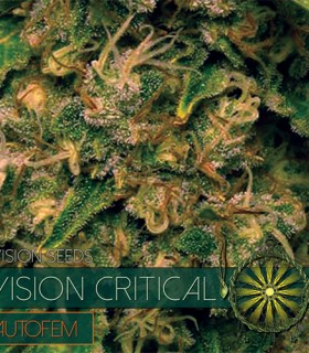 Vision Critical Auto by Vision Seeds
