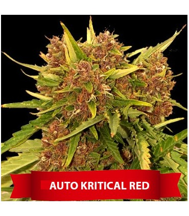 Auto Kritical Red